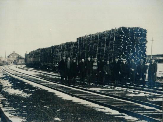 Trade in Christmas trees between 1920 and 1930